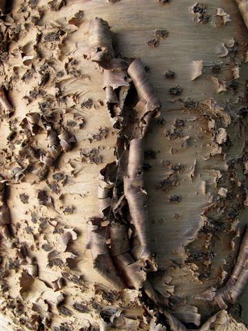 PIELES. Exposición fotográfica de Jan Muguruza 2012. Exposición PIELES en el Real Jardín Botánico de Madrid